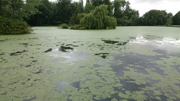 Watercraft – Signs of carp & under water features